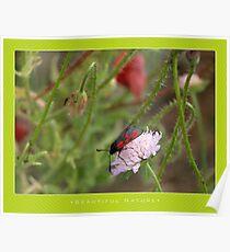 Macro: Beautiful  Nature - 8 Poster