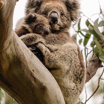 Koalas 1 by fotoWerner