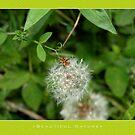 Macro: Beautiful  Nature - 10 by houk