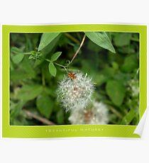 Macro: Beautiful  Nature - 10 Poster