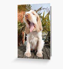 Orange and White Italian Spinone Puppy Dog Greeting Card