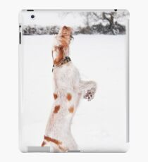Snow Catching Spinone iPad Case/Skin