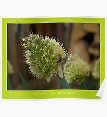 Macro: Beautiful  Nature - 12 Poster