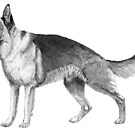 German shepherd - ink by doggyshop