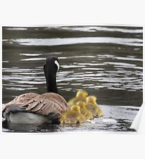 Goose with Goslings Poster