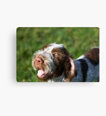 Spinone Puppy Smile - Brown Roan Italian Spinone Puppy Dog Head Shot Canvas Print
