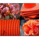 Orange details by Catherine Davis