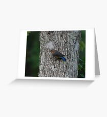 Female Eastern Bluebird Greeting Card