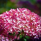 Schönheit im Rosa von Milena Ilieva