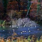 Autumn on the pond by missmoneypenny