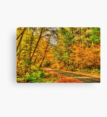 Autumn in the Willamette National Forest Canvas Print