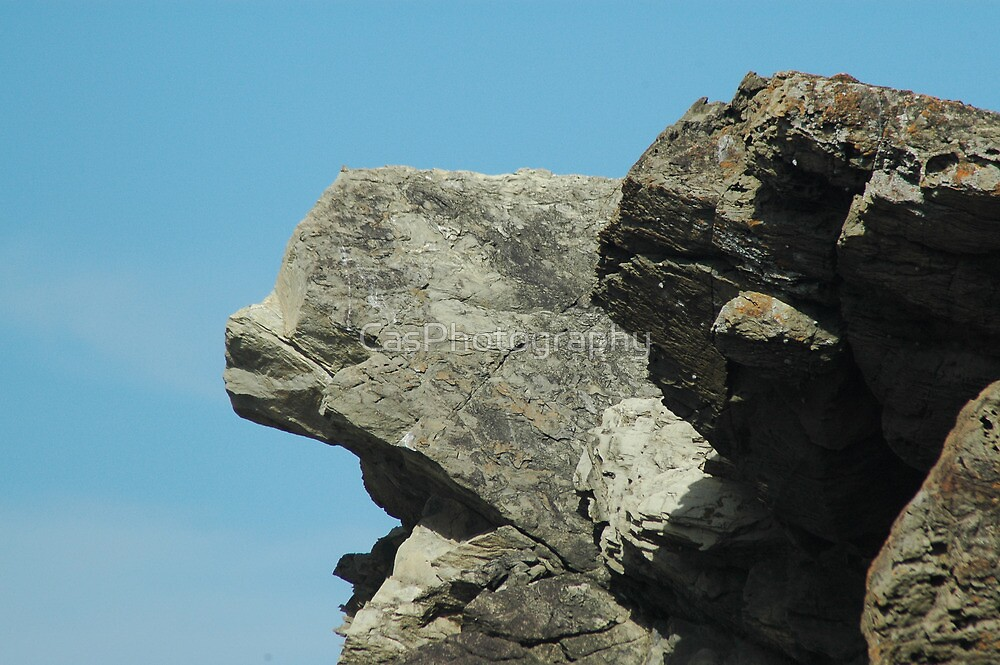 Rock Dolphin - NSW by CasPhotography