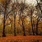 Fallen Leaves by jakeof