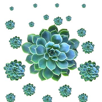 WHITE COLOR PATTERN OF BLUE SUCCULENTS by sharlesart