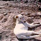 La Siesta del Perro Blanco by leystan