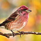 Finch on an Autumn Day by lorilee