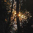 The Rising Sun by laureenr