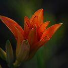 Summers Rays  by laureenr