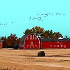 Lone Star Farmyard by Larry Trupp