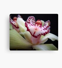 Orchids. Canvas Print