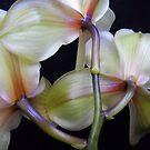 Brilliant flowers. by Vitta
