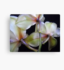 Brilliant flowers. Canvas Print