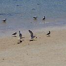 Shoreline Life by lezvee