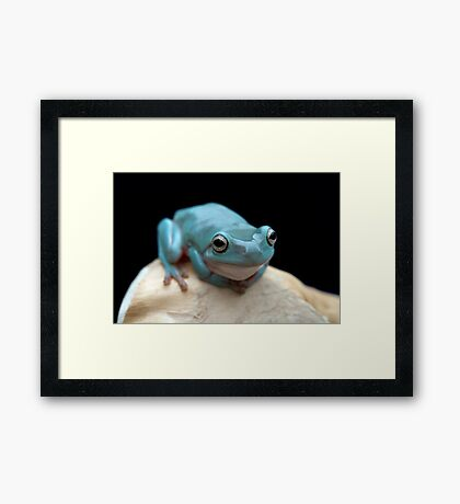 The happy frog Framed Print