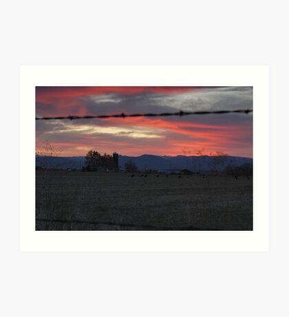 Cows - Sunset Art Print