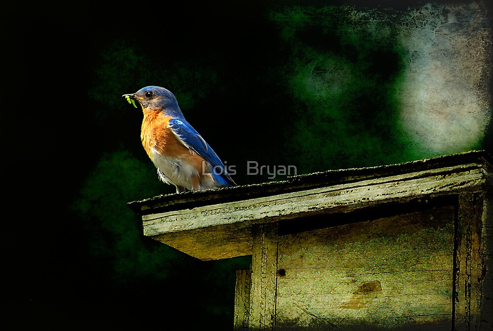 Proud Provider by Lois  Bryan