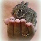Baby Rabbit  by vette