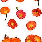 Orange Poppies by STHogan