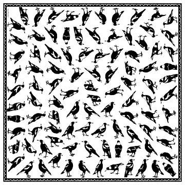 AUSTRALIAN MAGPIES - 4way scarf design by pavlovais