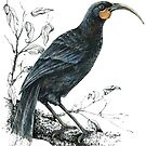 Huia, Native bird of New Zealand by EmilieGeant