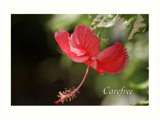 Carefree by JpPhotos