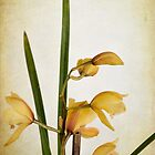 Yellow Orchid by Elaine Teague