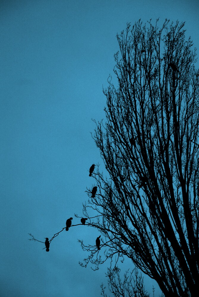 Ducks at Dusk 1 by Zolton