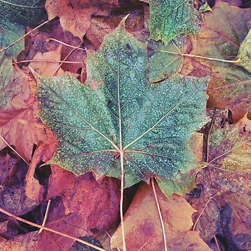 Autumn leaves  by adelemawhinney