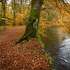 River Fowey by eddiej