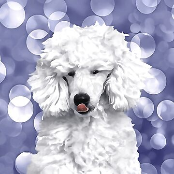 A Poodle. (Painting.) by cmphotographs