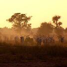 Cattle and Dust - Dusk in Senegal by helenlloyd