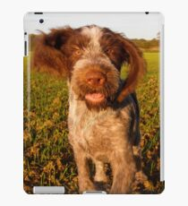 Brown Roan Italian Spinone Puppy Dog In Action iPad Case/Skin