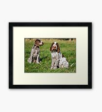 Brown Roan Italian Spinone Puppies Framed Print