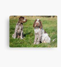 Brown Roan Italian Spinone Puppies Metal Print