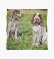 Brown Roan Italian Spinone Puppies Scarf