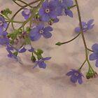 Tiny Blue by Sandra Foster