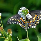 butterfly flower by Margaret Shark