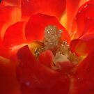 red and orange by Margaret Shark