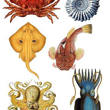 Sea life  by BigRedDot