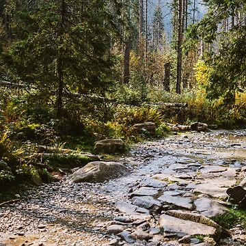Stone Hiking Path In Forest by PatiDesigns